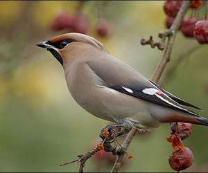 تفسير حلم الطيور رؤيا العصفور رؤية طير في المنام
