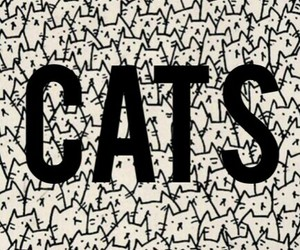 cats, wallpaper, and fondos de pantalla image