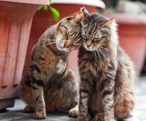 cat and love image