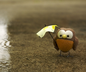 owl, cute, and rain image