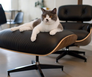 cat, chair, and lounge image