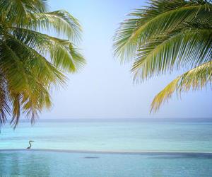 beach, Dream, and ocean image