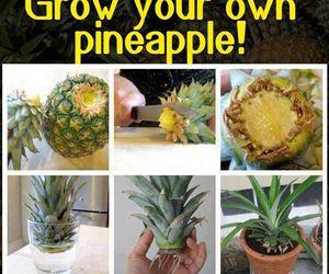 diy, fruit, and grow image