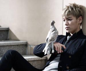 bigbang, T.O.P, and bird image