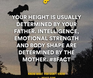 fact, father, and mother image