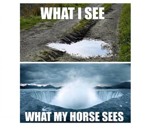 funny, horse, and water image