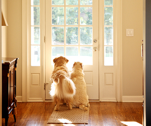 dog, door, and home image