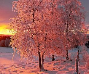 snow, tree, and pink image