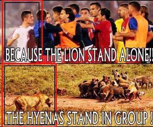 lion, albania, and albanian image