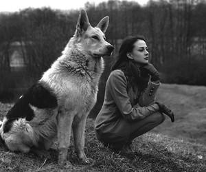 amigo, amo, and dog image