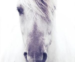 horse, beautiful, and fjord image