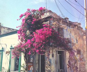 colombia, flowers, and house image