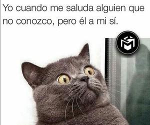 Gatos and frases en español image