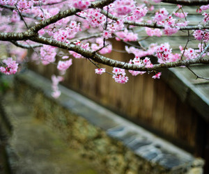 bokeh, cherry, and clouds image