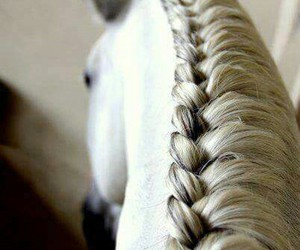 horse, braid, and white image