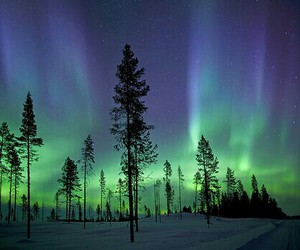 nature, tree, and aurora image