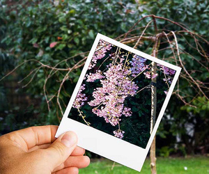 flowers and photo image