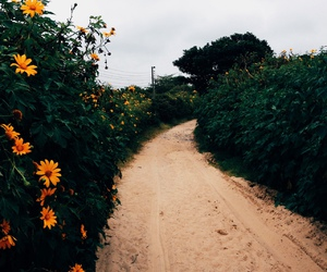 flowers, nature, and hipster image