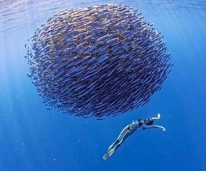 ocean, fish, and nature image