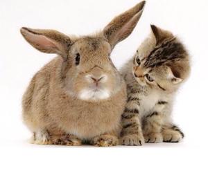 cat, rabbit, and kitten image