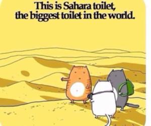 cat, funny, and Sahara image