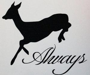 always, deer, and doe image