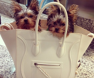 dog, puppy, and bag image
