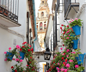 flowers, travel, and place image