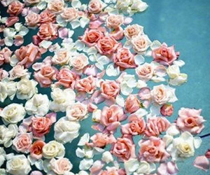 flores, roses, and flowers image
