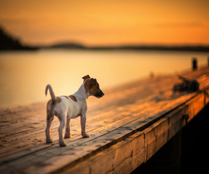 photography and dog image