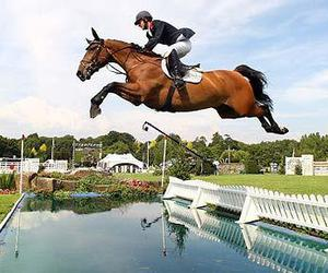 horse, jump, and show jumping image