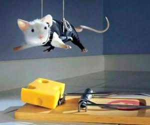 mouse, cheese, and funny image