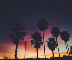 california, colors, and palm trees image