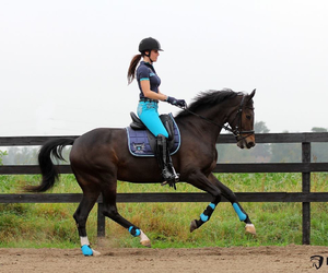 beautiful, blue, and equestrian image
