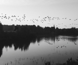 birds and black and white image