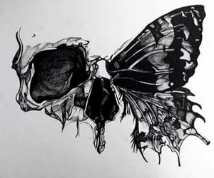 butterfly, skull, and draw image