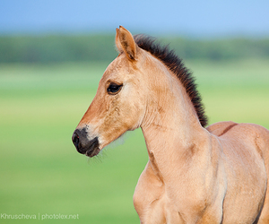 horse, summer, and foal image