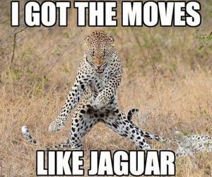 funny, jaguar, and lol image