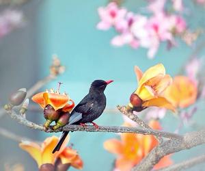 bird, flowers, and garden image