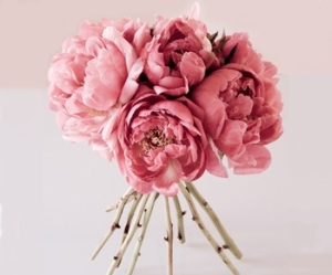 peonies, flowers, and pink image