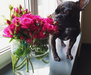 dog, flowers, and roses image