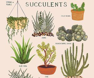plants, succulent, and cactus image