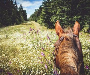 horse, ears, and nature image