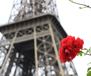 paris, rose, and eiffel tower image