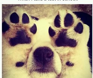 dog, lol, and nervous image