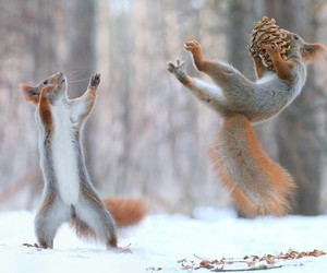 squirrel, animal, and snow image