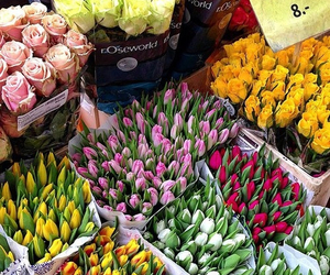 tulips, flowers, and roses image