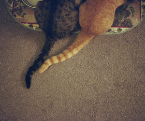 cats, kitten, and tails image