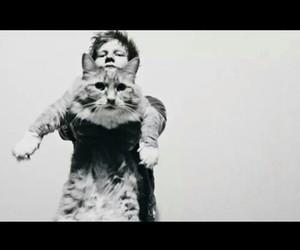 ed sheeran, cat, and black and white image