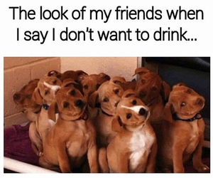 drink, funny, and dog image